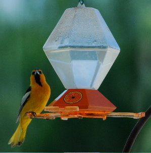 Hooded Oriole bird feeder picturegallery171325.tmp/666.jpg
