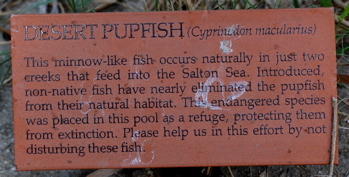 Pupfish 171325.tmp/CVPvisitorcenter.jpg
