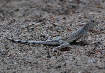 lizards171325.tmp/CVPvisitorcenter.jpg