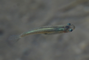 Pupfish Coachella Valley171325.tmp/CVPvisitorcenter.jpg