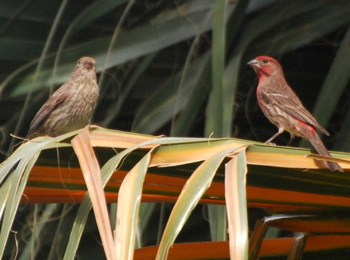 Purple Finch171325.tmp/CVPvisitorcenter.jpg