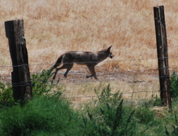Coyote171325.tmp/CoachellaValleyWildBirdCenter.jpg