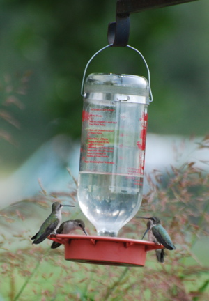 Hummingbird Feeders171325.tmp/SPAZbarnswallownest.JPG