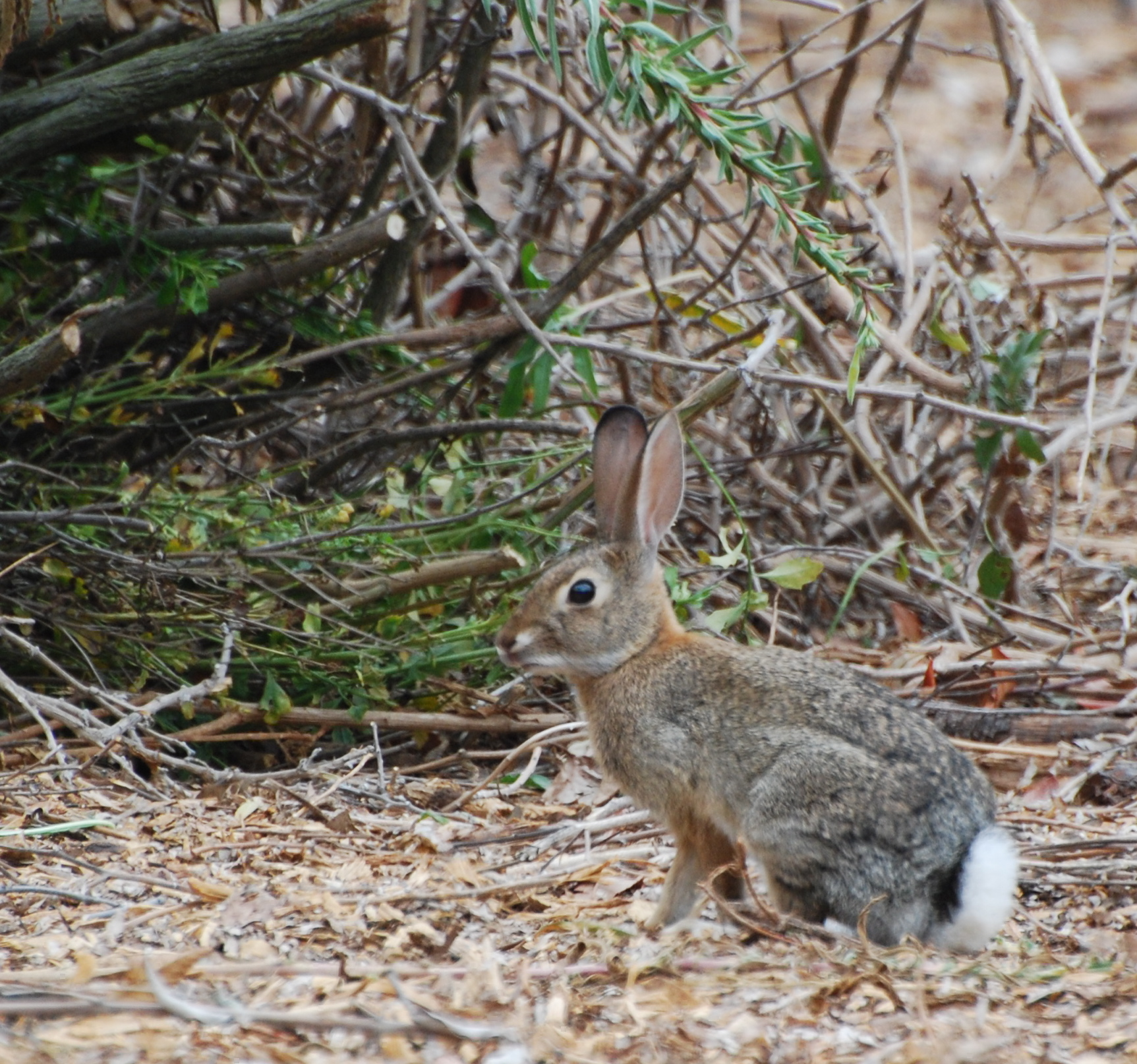 Cottontail Rabbit171325.tmp/orangebutterfly.JPG