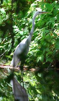 Birds Of El Dorado Regional Park Nature Center Birdwatching